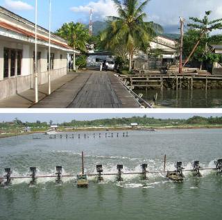 インドネシア水産加工事業
